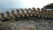 Last week's catch - Whale bones on beach at Lamalera, Indonesia