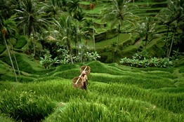 A farmer in terraced rice fields in the central highlands of Bali. ©Stuart Franklin / Magnum Photo