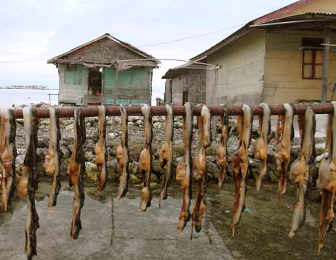 Giant clams hung out to dry in front of a fisherman's house in Pulau Banyak, Aceh