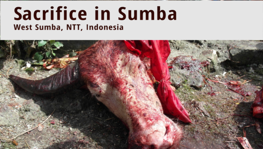 Ritual Slaughter and Funeral Sacrifice in Sumba