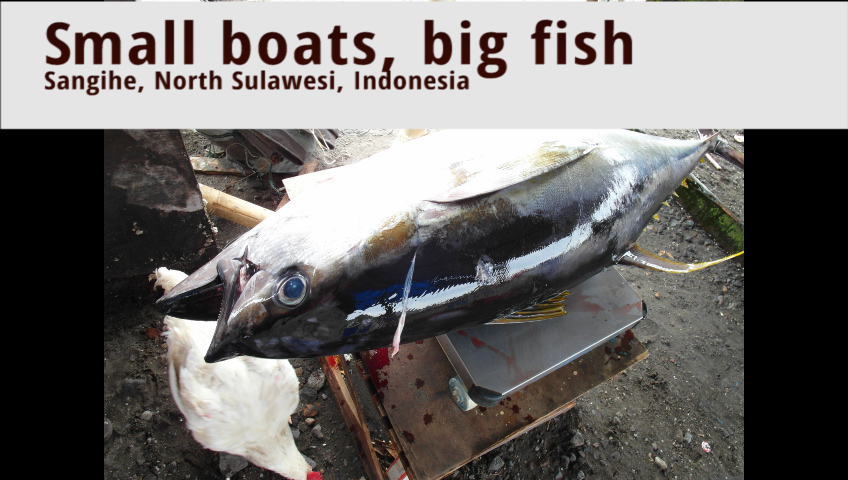Big fish in small boats: fishing for tuna from outrigger canoes in Eastern Indonesia