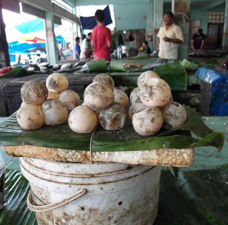 Turtle eggs for sale in Banda Aceh market. One pile sells for under two dollars.
